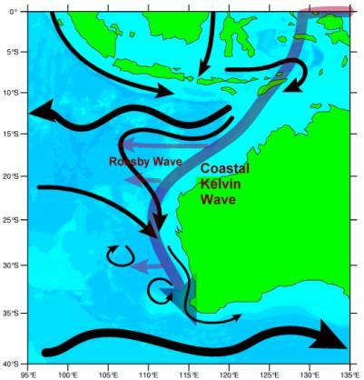 the leeuwin current The leeuwin current is a tropical current, consisting of warm, low salinity water that affects western australia's coastal waters and wildlife currents are part of a large sub circular current system called a gyre the currents in the southern hemisphere gyres circulate in an anti-clockwise .